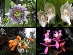 Identifikasi Berbagai Jenis Flora
