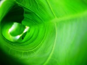 Biomassa, Kandungan Klorofil